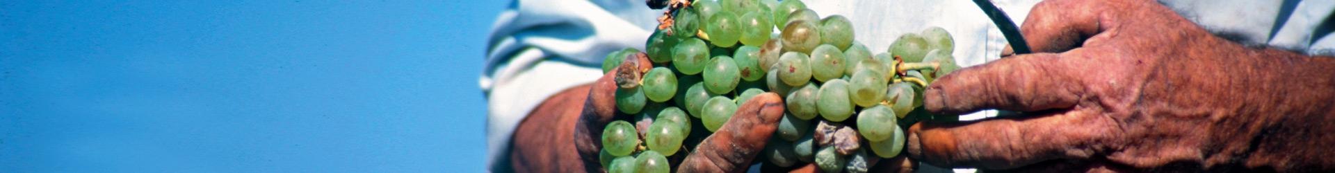 AGROTOURISME EN GRECE